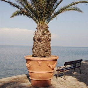 palm in planter