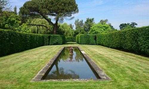 hedges around pool